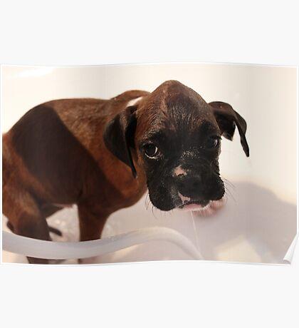 Es ist Badezeit - Boxer Dog Series Poster