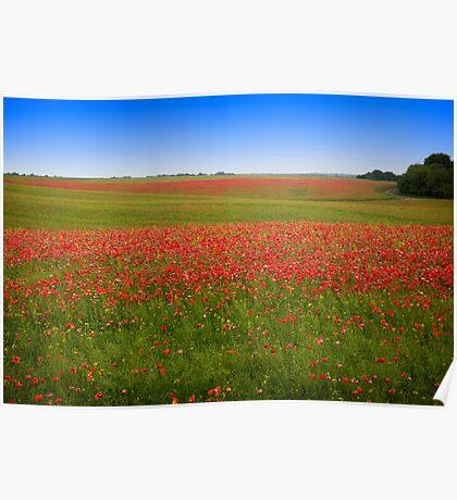Poppy Field - Ukraine Poster