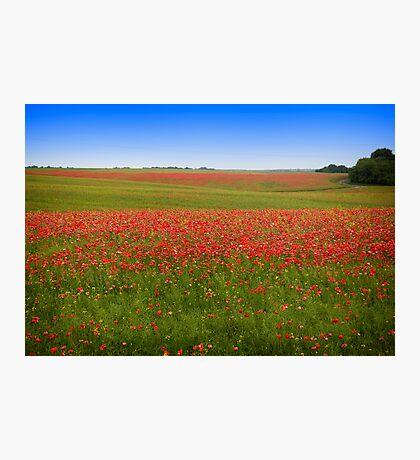Poppy Field - Ukraine Photographic Print