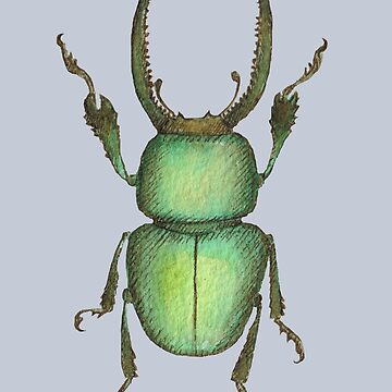Stag Beetle Illustration by beckyb