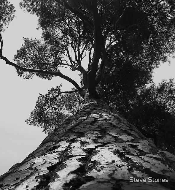 Tree by Steve Stones