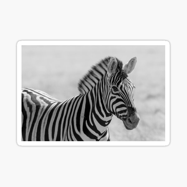 A black and white zebra of course Sticker