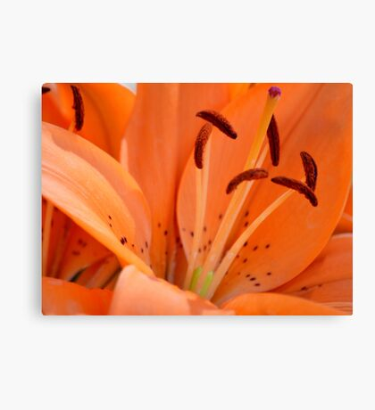 Lily stamens Canvas Print
