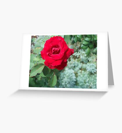 A Rose is a Rose 2 Greeting Card