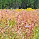 Colorful Field by Dawne Dunton