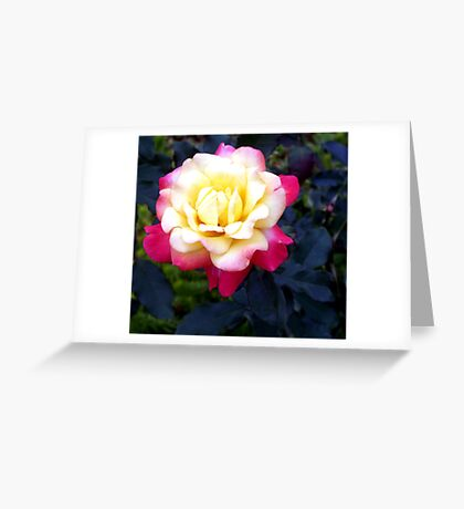 A Rose is a Rose 10 Greeting Card