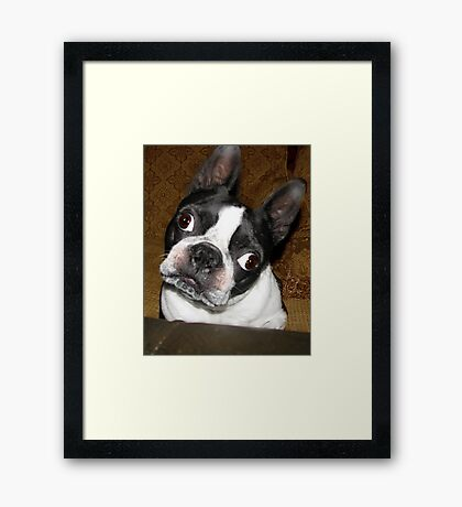 Huh?  Did you say something!   Framed Print