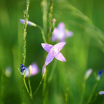 """""""маленькая красавица"""" """"little beauty"""" by AndreasKoerner"""