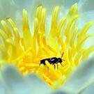 Amongst The Lotus by ©Dawne M. Dunton