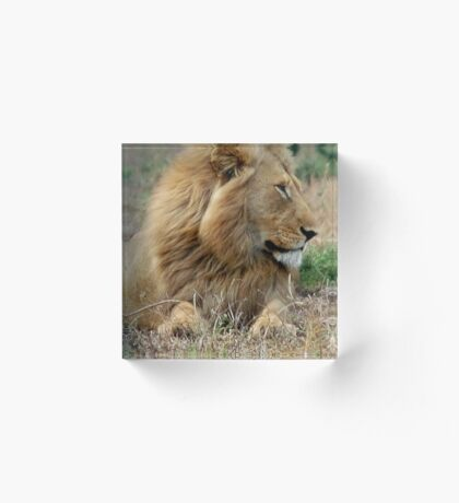 FEELING LONELY - THE LION – Panthera leo Acrylic Block