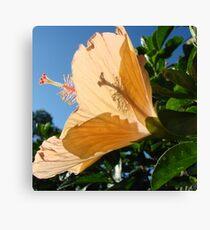 Hibiscus Beauty Canvas Print
