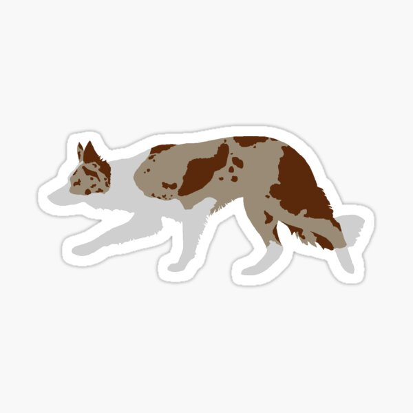 Border Collie (Red Merle and White) Sticker