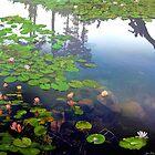 Pond Reflections by Igor Zenin