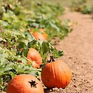 Pumpkin Patch by Southern  Departure
