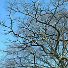 Twisty tree against blue sky by Ditherella