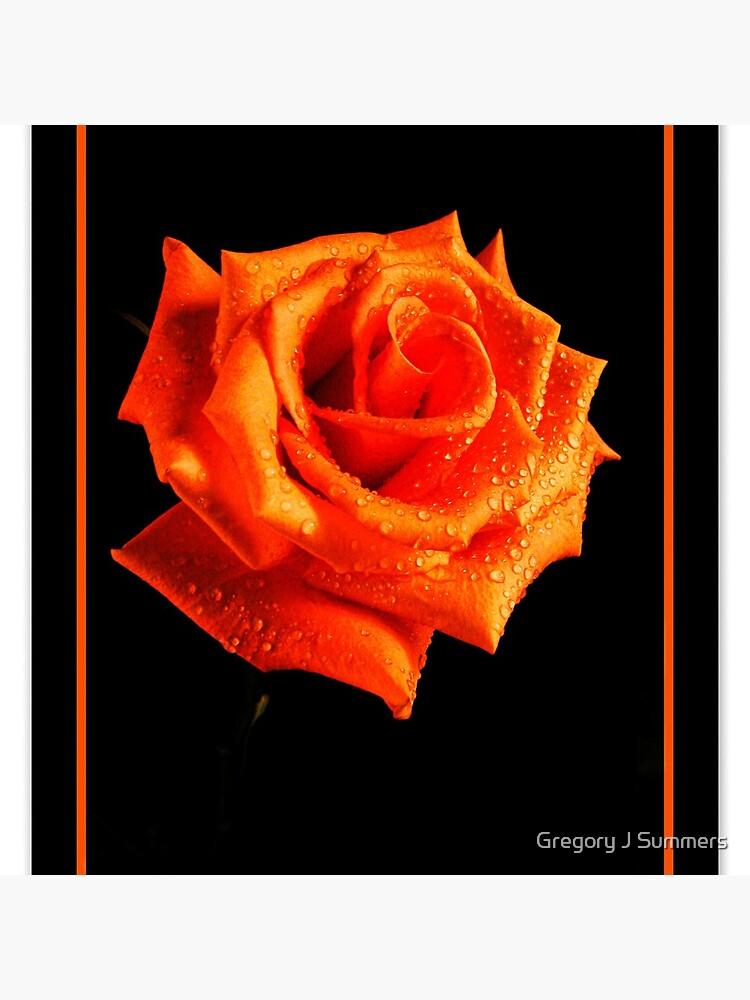 Orange Delight by nikongreg