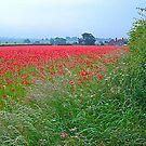 Field of Rememberance by Trevor Kersley