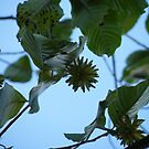 Tree leaves and seeds by Ditherella