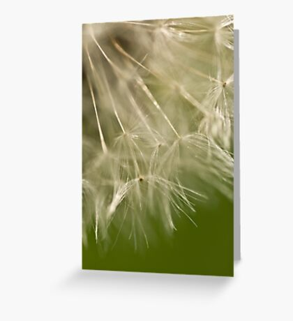 Dandelion details Greeting Card