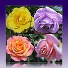 Collage mit vier Rosen von BlueMoonRose
