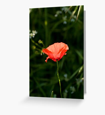 Paper Thin Greeting Card