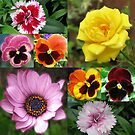 Sunkissed Summer Flowers Collage - ungerahmt von BlueMoonRose