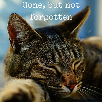 Gone but not forgotten (Cat) by Impurrfectlife