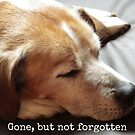 Gone but not forgotten (Dog) by Kamira Gayle