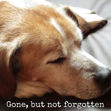 Gone but not forgotten (Dog) by Impurrfectlife