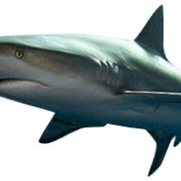 SHARK by coleenross