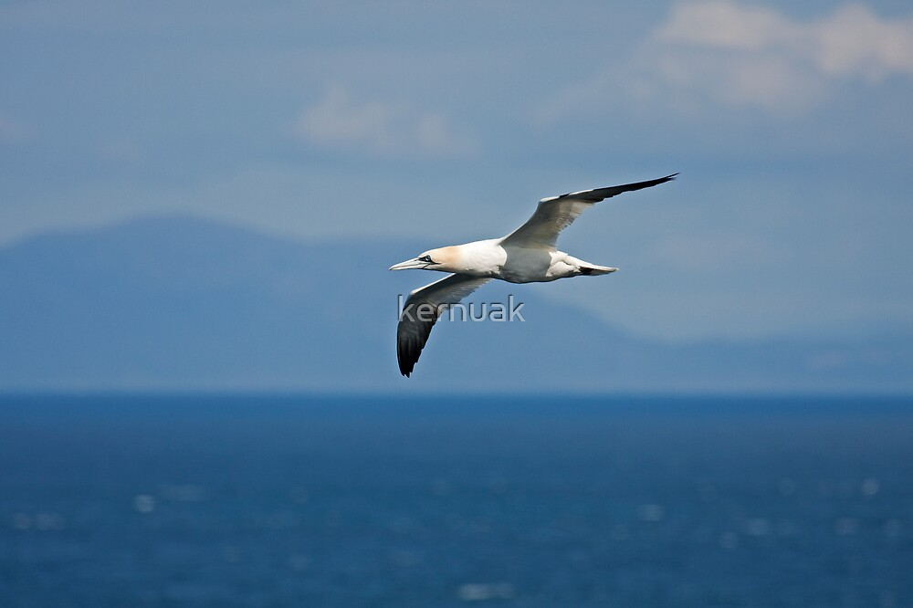 Gannet and the Outer Isles by kernuak
