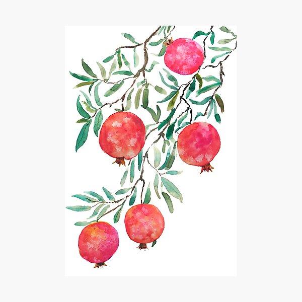 red orange pomegranate watercolor Photographic Print