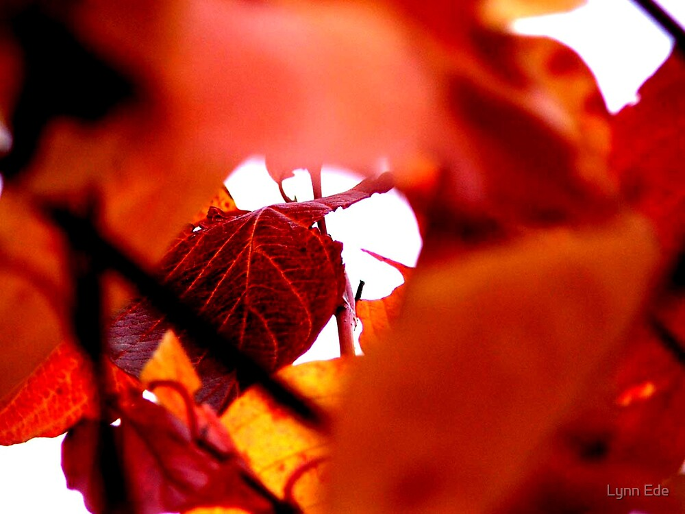 Autumn leaves - Red by Lynn Ede