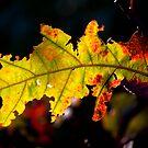 Autumn in Mentone by Phillip M. Burrow