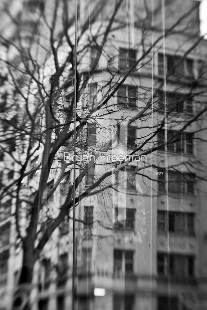 Wintry Reflection - Sydney - Australia by Bryan Freeman