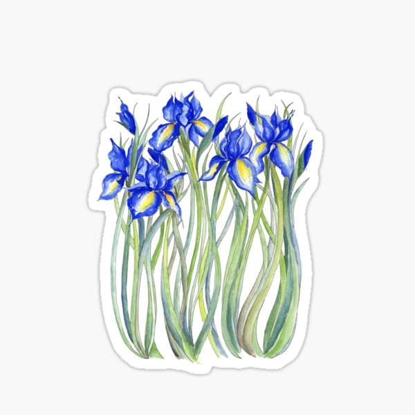 Blue Iris, Illustration Sticker