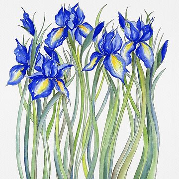 Blaue Iris, Illustration von JRoseDesign