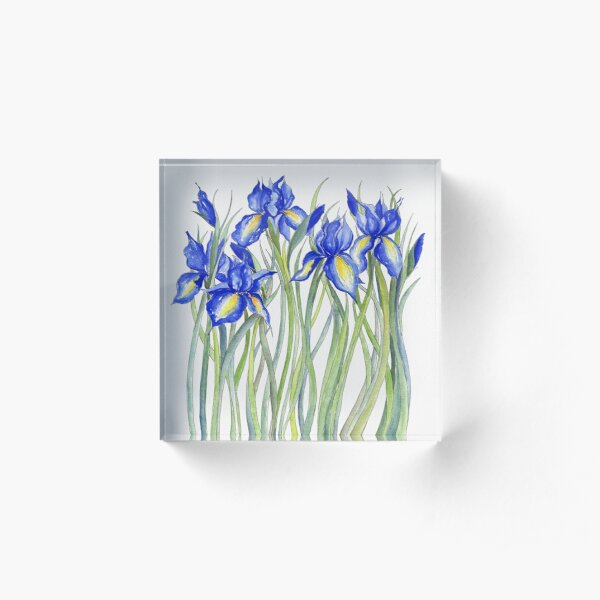 Blue Iris, Illustration Acrylic Block