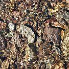 Stones in the water by Gillen