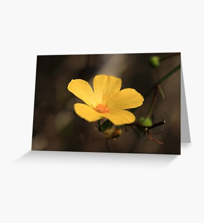 Little Buttercup Greeting Card
