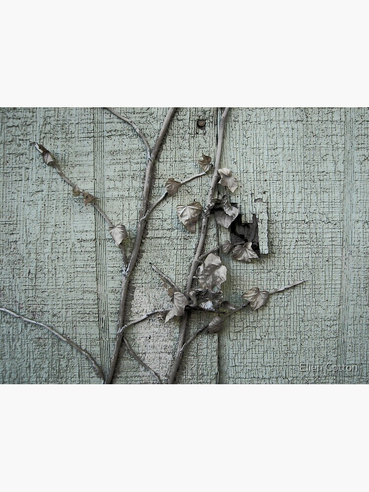 Old Paint with Vines by ellcot