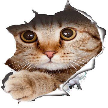 cat sticker car by hamzabarcelonaa