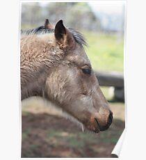 Foal 2009 Poster
