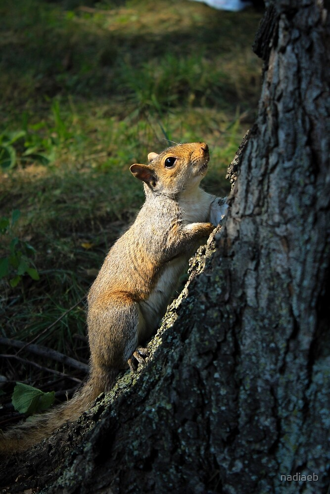 Squirrel in Central Park by nadiaeb