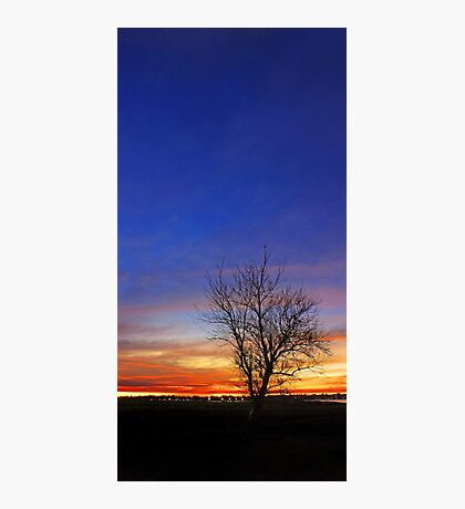 Tree At Dusk  Photographic Print