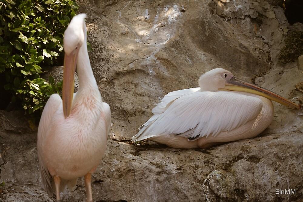 Birds by EinMM