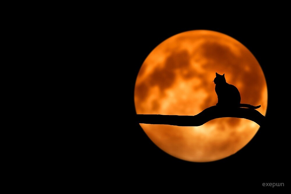 Moonlight by exepwn