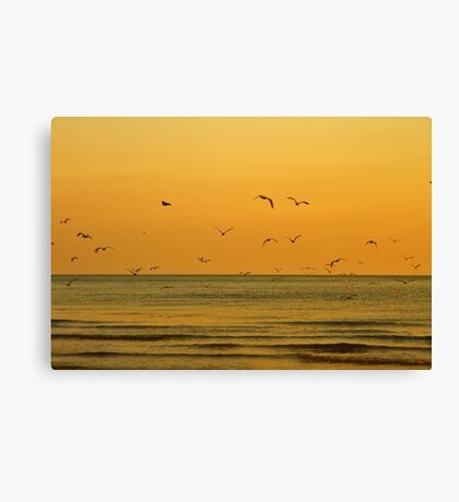 Seagulls At Sunset - Brighton - England Canvas Print