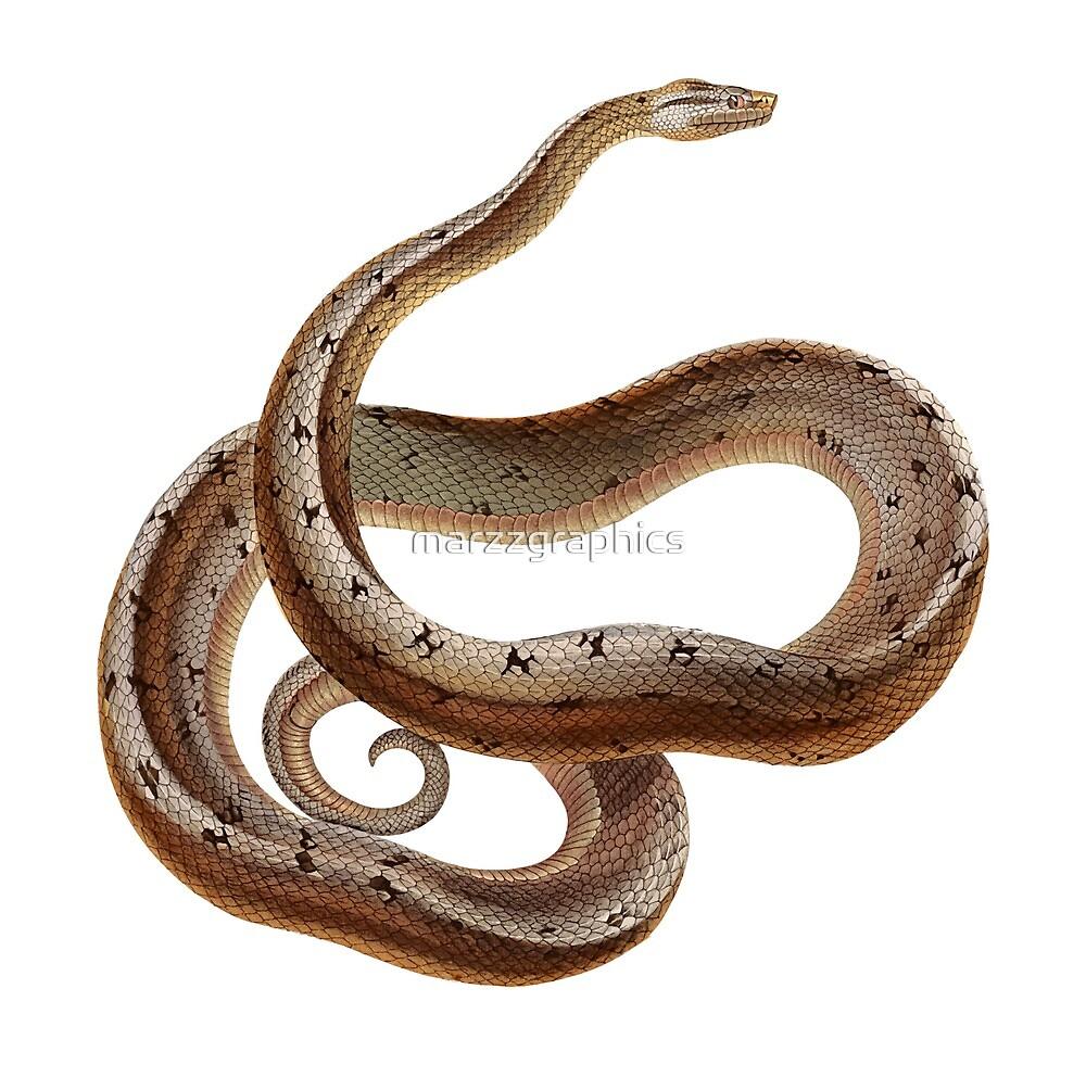 Dusky Dwarf Boa, Tropidophis, Cuban Wood Snake, Giant Dwarf Boa, Animal, Boa, Reptile by marzzgraphics