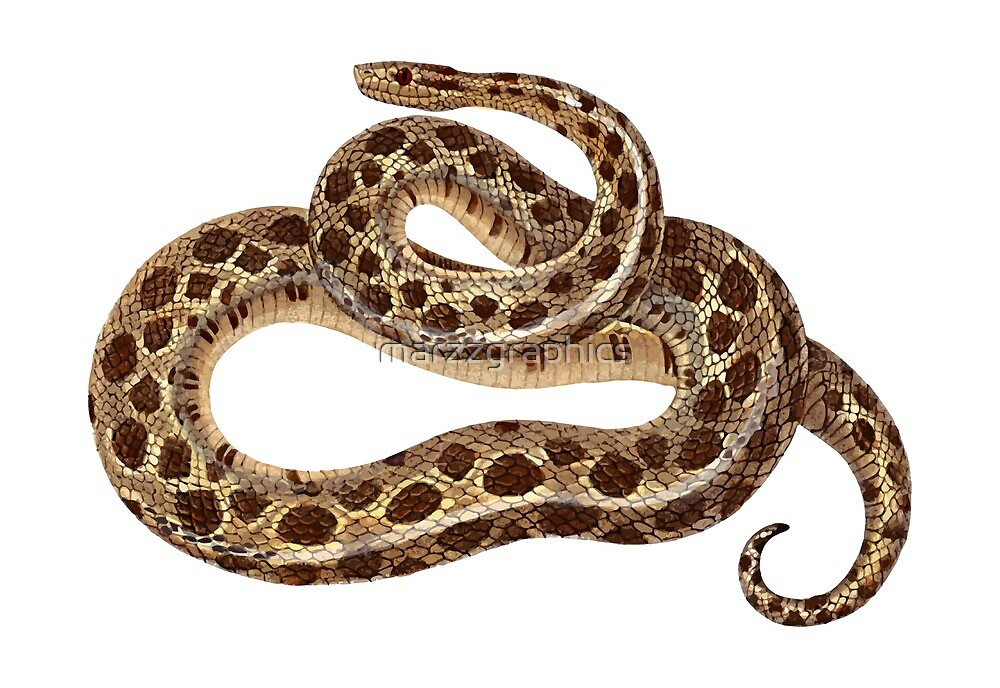Spotted Dwarf Boa, Tropidophis, Leionotus Maculatus, Animal, Reptile, Snake by marzzgraphics